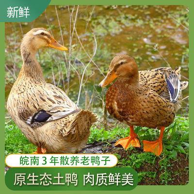 3年5.6斤农村散养老鸭麻鸭土鸭草鸭老鸭子活鸭现杀鸭笨鸭鸭子整鸭
