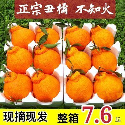 【脆甜爽口】正宗四川丑橘不知火现摘现发当季新鲜孕妇水果包邮