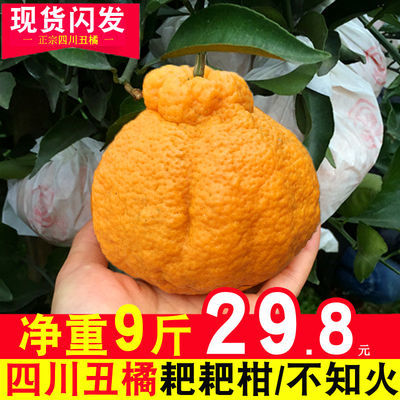 四川丑橘不知火当季新鲜水果包邮丑柑耙耙柑桔子橘子新鲜孕妇水果