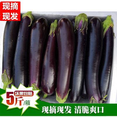 {坏果包赔}新鲜茄子长茄子5斤 农家紫长茄子现摘蔬菜大茄子茄子煲