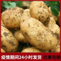【新鲜土豆】新鲜大土豆5斤东北现挖洋芋农家肥种植批发马铃薯