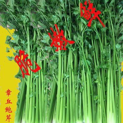 山东正宗章丘鲍芹农家自产2/3/4斤精芹新鲜蔬菜水果产地直销包邮