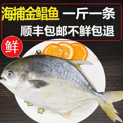 野生金鲳鱼新鲜海鱼鲜活冷冻金昌鱼大平鱼鲳鳊鱼海鲜水产包邮