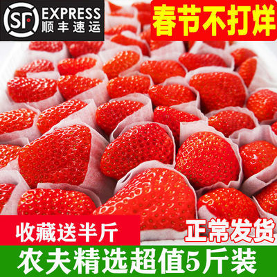 新鲜四季草莓双流草莓水果烘焙奶油牛奶蛋糕酸草莓榨汁饮品店专用