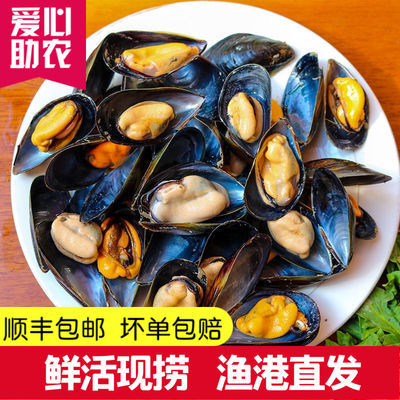 【顺丰包邮】鲜活海虹青口贻贝淡菜海虹贝类海鲜水产5斤现捕现发