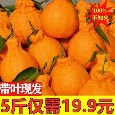四川丑橘不知火丑八怪橘子新鲜水果当季桔子柑橘丑柑孕妇水果批发