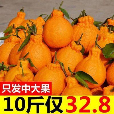 【好吃不上火】丑橘不知火新鲜丑八怪橘子耙耙柑当季水果桔子