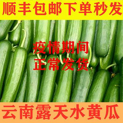 【顺丰包邮】云南新鲜水果小黄瓜3斤5斤蔬菜脆嫩青瓜孕妇蔬菜