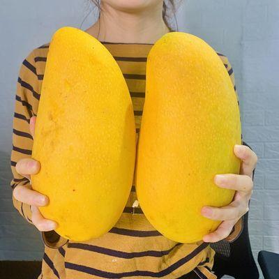 现货特价 海南当季大金煌芒水仙芒果甜心芒新鲜水果非贵妃2/5/9斤