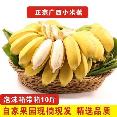 【可选顺丰配送】【泡沫箱精选】广西小米蕉10/5/1斤新鲜香蕉当季