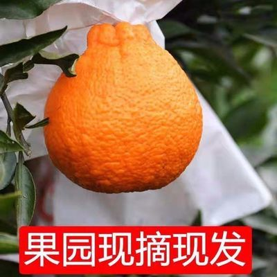 【可选顺丰配送】四川丑橘不知火丑八怪橘子新鲜当季桔子柑橘丑桔