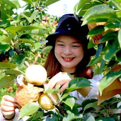 淅川丹江湖牛奶黄金梨爆汁清甜梨子雪梨水果新鲜当季净重5斤包邮