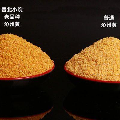 老品种黄小米山西特产新米黄金苗忻州泌州沁州县牌小米食物小米