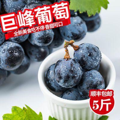 辽宁巨峰葡萄甜美多汁5斤装新鲜水果东北水果自然果冷链顺丰包邮