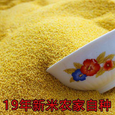 19年新米农家黄小米3斤5斤散装糯小黄米粥山西特产宝宝米五谷杂粮