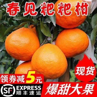 【顺丰包邮】四川春见耙耙柑孕妇水果新鲜当季粑粑柑橘子桔子整箱