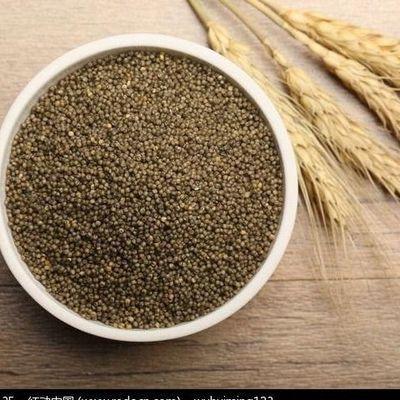 19年新米山西特产黑小米农家小米五谷杂粮粗粮月子米宝宝米包邮