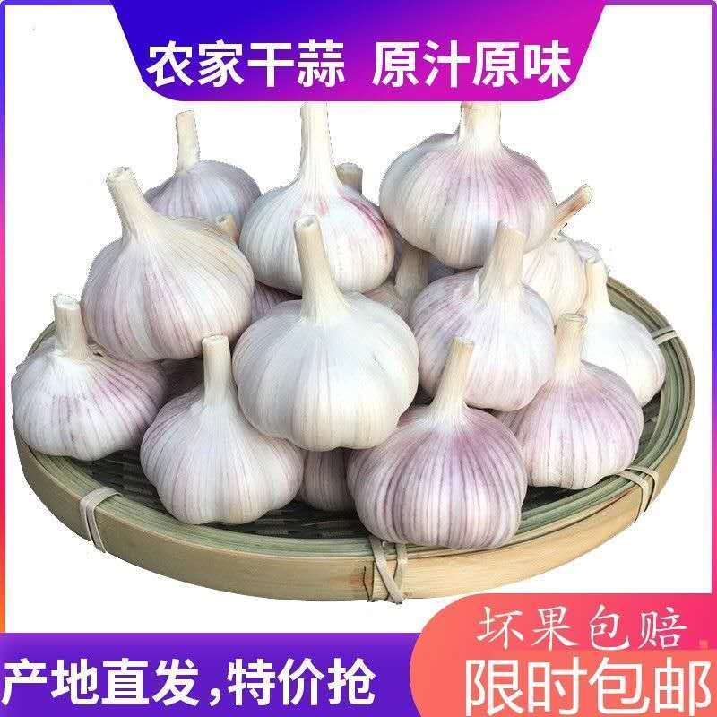 2019新鲜大蒜农家自产自种2斤3斤5斤包邮产地直发坏果包赔大蒜头