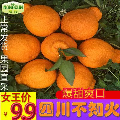 四川不知火丑橘桔子新鲜水果丑八怪耙耙柑橘子蜜桔当季整件包邮