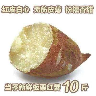 【粗粮软糯】板栗红薯10斤/5斤新鲜现挖沙地农家红皮番薯蜜薯包邮