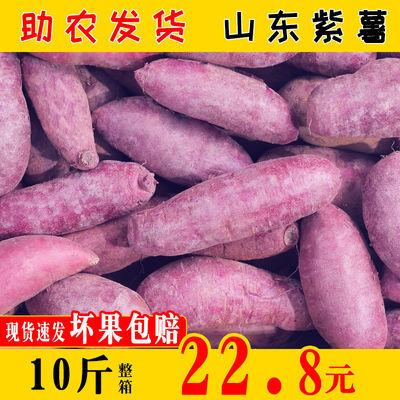 现挖紫薯新鲜10斤红薯农家小紫薯香薯生番薯山东大地瓜小紫芋蔬菜