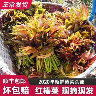 【顺丰包邮】香椿芽新鲜 应季蔬菜农家绿色嫩生鲜叶红油椿1/2/4斤
