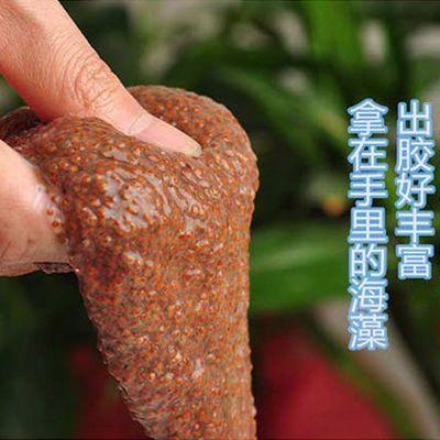 2020新品天然海藻小颗粒补水保湿去黑头海藻泥面膜粉免洗男女祛痘