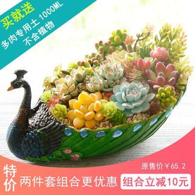 包邮特大号孔雀蓝多肉花盆树脂创意个性可爱拼盘组合盆栽含盆带土