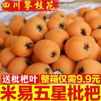 【9.9抢一整箱】四川攀枝花米易枇杷新鲜水果琵琶果大五星枇杷果