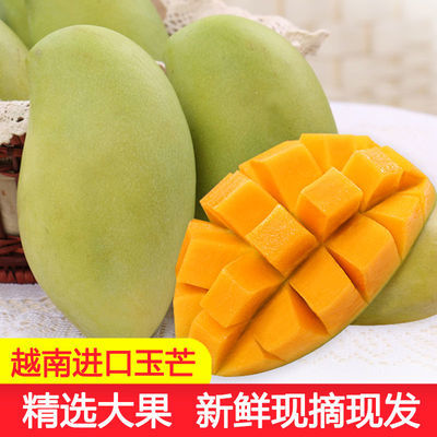 越南玉芒进口芒果青芒果甜心芒果当季新鲜水果3/5/10斤装 催熟吃【10月17日发完】