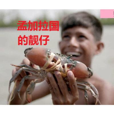 螃蟹活体海鲜青蟹顺丰空运包邮肉质饱满营养丰富个大体肥13.9一只