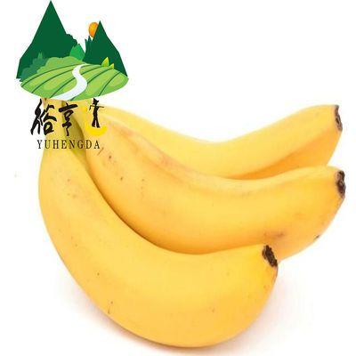 《新店冲量》【5斤包邮】广东阳江市大八特色香蕉水果5斤非小米蕉
