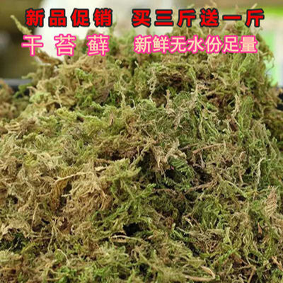 专用水苔藓盆栽石斛嫁接苗木栽培食虫植物基质干苔藓兰花蝴蝶兰