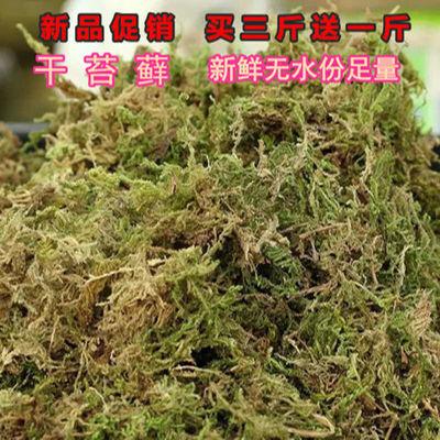 兰花蝴蝶兰专用水苔藓盆栽石斛嫁接苗木栽培食虫植物基质干苔藓