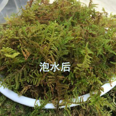 蝴蝶兰花栽培基质多肉石斛营养土水苔苗木嫁接乌龟冬眠水草干苔藓