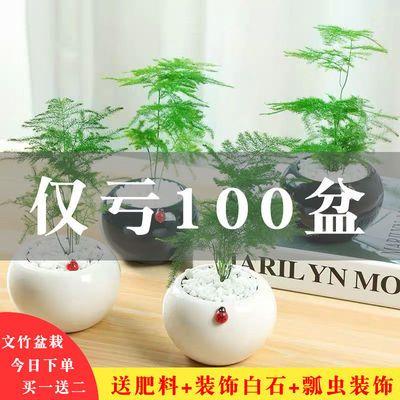 [只限今天]文竹盆栽室内吸甲醛植物办公室绿植桌面小盆景文竹苗