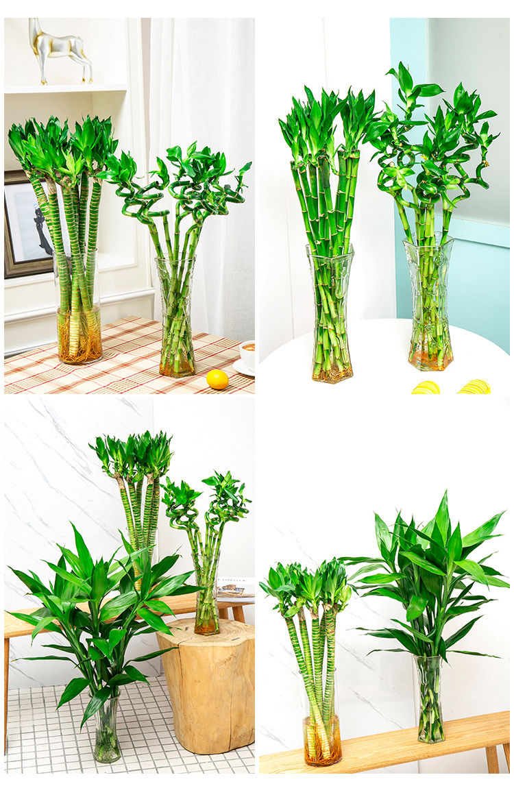 绿植盆栽品种名字大全