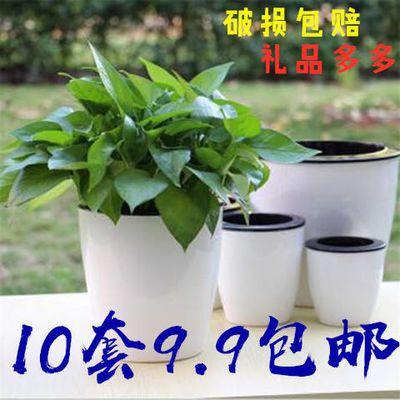 简约懒人自动吸水树脂塑料加厚花盆办公室盆栽绿植栀子花文竹通用