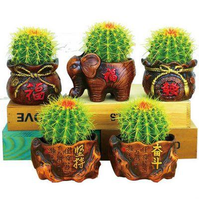 金虎仙人球盆栽 办公室桌面防辐射多肉植物客厅卧室绿植 含盆包邮