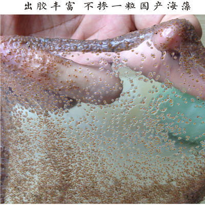 AAAA级珍珠粉小颗粒海藻面膜500-1200克补水美白淡斑祛痘修复海澡