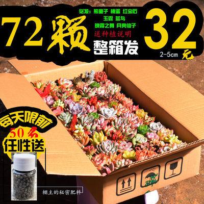多肉植物1-72颗不重复 多肉老桩盆栽室内花卉园艺整箱发货