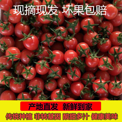 圣女果千禧小番茄精选新鲜水果樱桃柿子西红柿3斤5斤包邮现摘