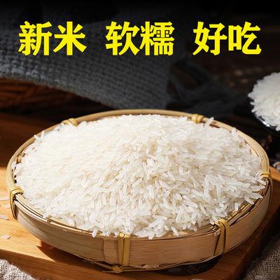 当季新米10斤南方生态天然长粒香米农家自产优质大米2019新米粳米