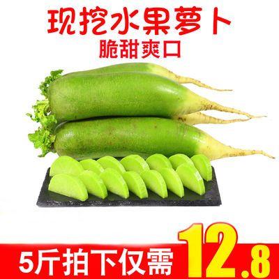 水果萝卜5斤甜脆当季潍坊青萝卜潍县沙窝萝卜胡萝卜新鲜包邮