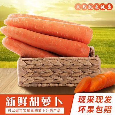 新鲜胡萝卜现挖产地直发河南农家沙地新鲜蔬菜红萝卜清脆农家自种