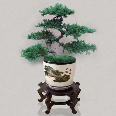 新款送盆+肥料】迎客松盆景造型树地柏树苗室内办公桌阳台景观树