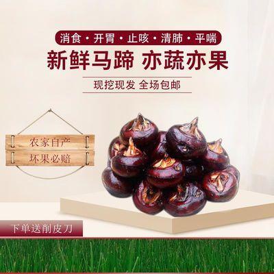 安徽马蹄荸荠新鲜水果蔬菜现挖现发下单(1斤3斤五斤)下单包邮