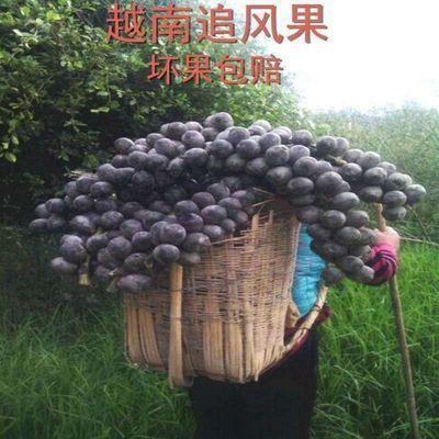 越南新鲜追风果刺虎 18个一份 900克左右保证质量送多种赠品