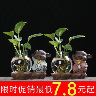 猪摆件紫砂茶宠陶瓷玻璃摆件禅意水培养绿萝小花瓶迷你家居装饰品