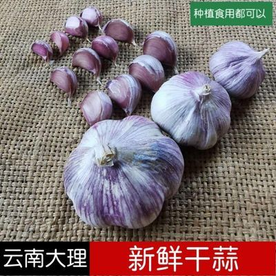 2020年云南紫皮大蒜红皮大蒜新鲜干蒜5斤腊八蒜10斤蒜种批发包邮